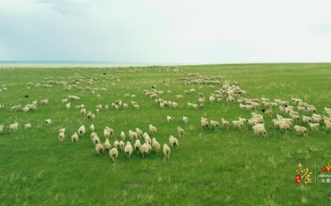 无限极独家总冠名的《知食中国》走进呼伦贝尔大草原